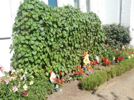 «Зеленый сад»